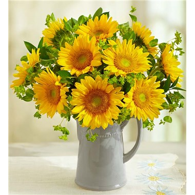 PITCHER_FULL_OF_SUNFLOWERS